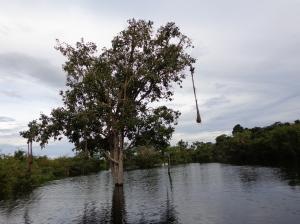One tree....