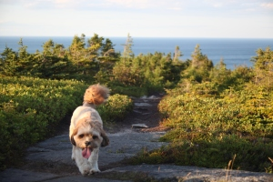 Hiking the East Coast Trail